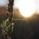 This-Silent-Breeze-Cover-300×300