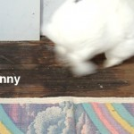 Anti-Gravity Bunny